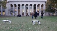 The Massachusetts Institute of Technology's nine four-legged robots