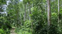 A forest in Ghana