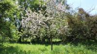 Barrington Court orchard