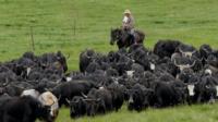 Тибетский пастух