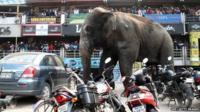 Indian bystanders watch as a wild elephant walks along a busy street in Siliguri