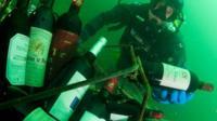 布列塔尼海岸的海床温度在9-10摄氏度左右,与深酒窖的温度相当。