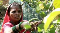 Rahibai Soma Popere cutting crops
