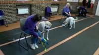 Training assistance dogs