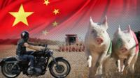 Composite image of a motorcycle, pigs, a Chinese flag and a farm in Iowa