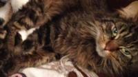 Tiger the long-haired Tabby cat suffered serious burns in the attack, as Martin Cassidy reports
