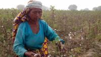 60-year-old Maqsood Mai picks cotton