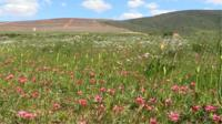 Field of flowers in South Africa