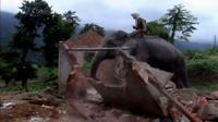 Elephant destroying a house
