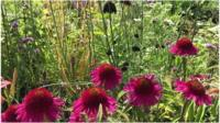 Bright pink or red flowers in a show garden