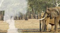 Cloud of smoke next to an elephant