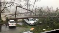 Trees down in Panama City, Florida