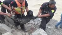 Dog rescued from flooded river in Peru