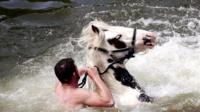 Gypsy man washing a horse