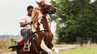 Zydeco rider