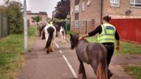 Horses being led along a footpath