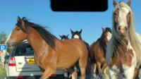 Horses on A47