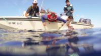 Scientist studying tiger sharks