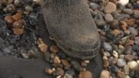 Oil on beach at Gorleston