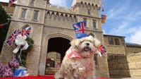 Archie the dog with Windsor Castle kennel