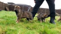 Police puppies