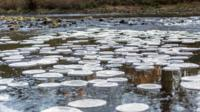 Ice pancakes on the River Swale