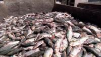 Truckload of fish