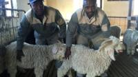 Mohair farmers