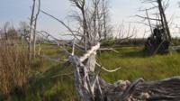 Dead trees on islands in York River