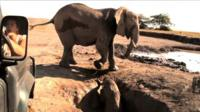 Baby elephant trapped in a well