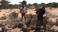 Charcoal-makers cut trees
