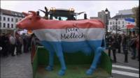 Cow statue on tractor