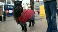Shetland pony in street in Rotherham