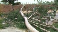 A tree blocking a road