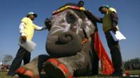 Elephant beauty pageant