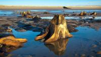 Borth submerged forest from Visit Wales