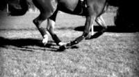 Horse galloping (c) Ellen Singer