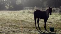 A horse feeds while illuminated by early morning misty light