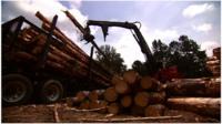Trucks picking up timber