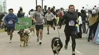 Dogs and their owners racing in Chile