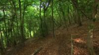 Laurie Lee's wood