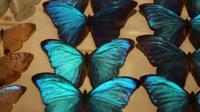 Butterflies on display