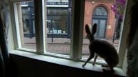 Hare in shop window