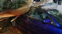 A fallen tree wedged into a car roof