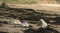 Mysterious white substance on Cornish beach