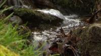 Stream in Powys