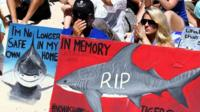 Protestors with signs painted with sharks on them