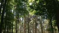 Forest canopy hosts Living Symphonies