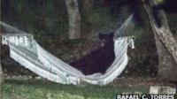 A black bear relaxing in a hammock