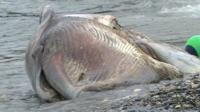 Minke whale found dead on Manx beach